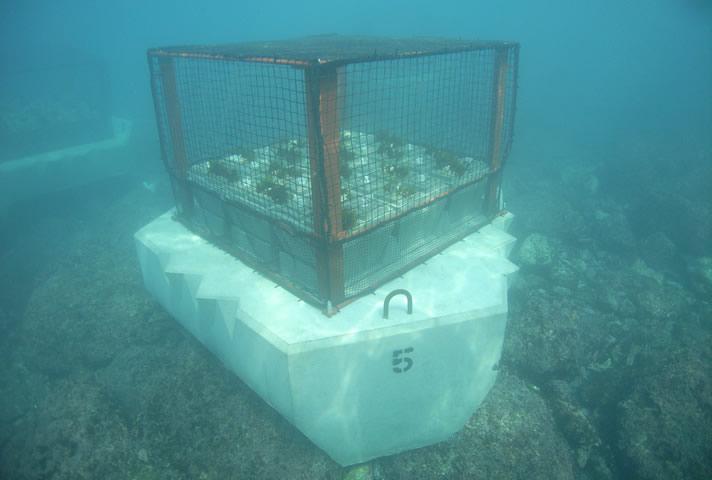 沈設中の多機能型藻場増殖礁「K-hatリーフβ型(エビクルハウス付)」